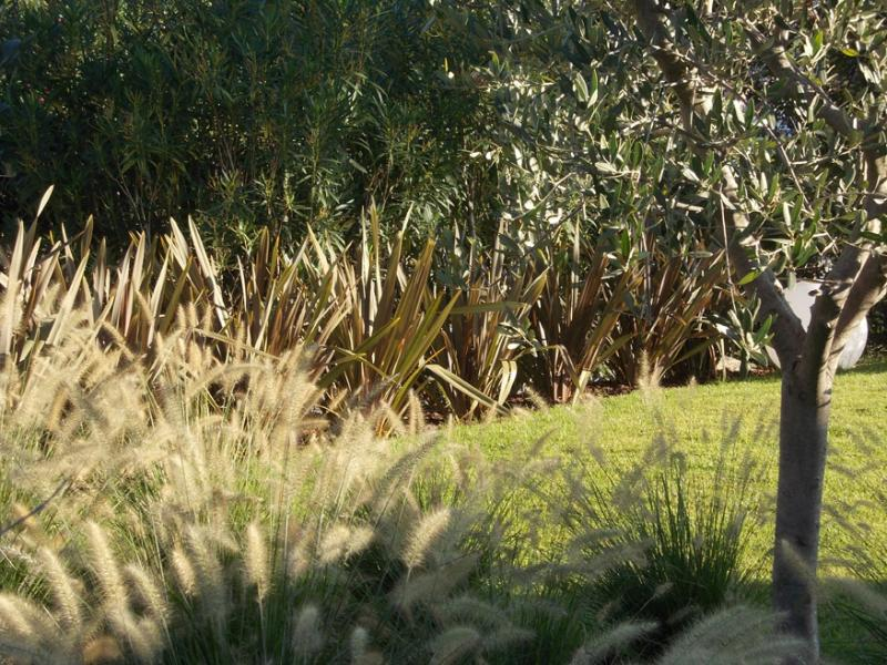 Realizzazione giardino arido numana - Giardino con ulivi ...