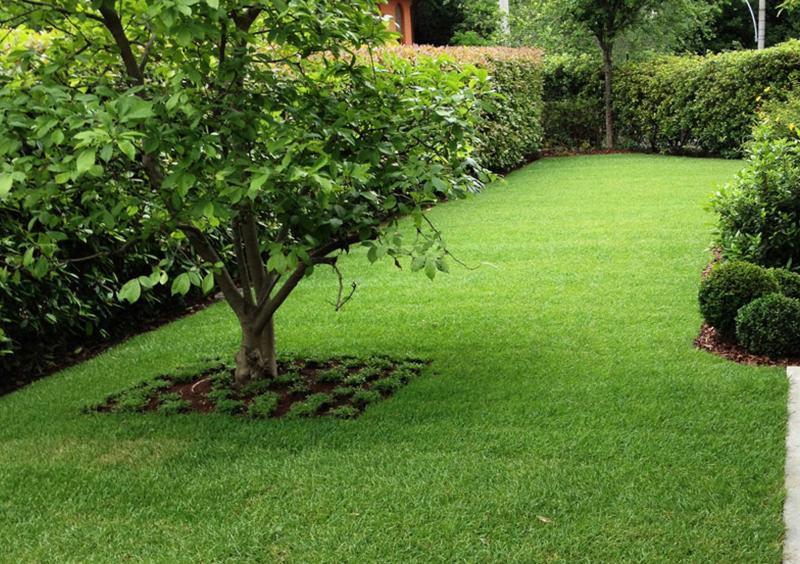 Realizzazione e servizi di manutenzione giardino privato for Prato manutenzione