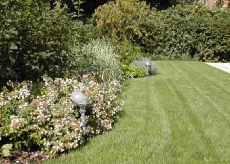 Abbattimento alberi bologna abbattimento piante taglio for Terrazze e giardini bologna 2016